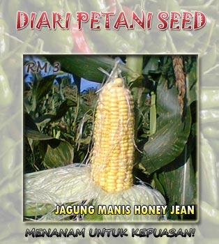 cover-jagung-manis